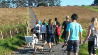 犬を散歩させるグループ
