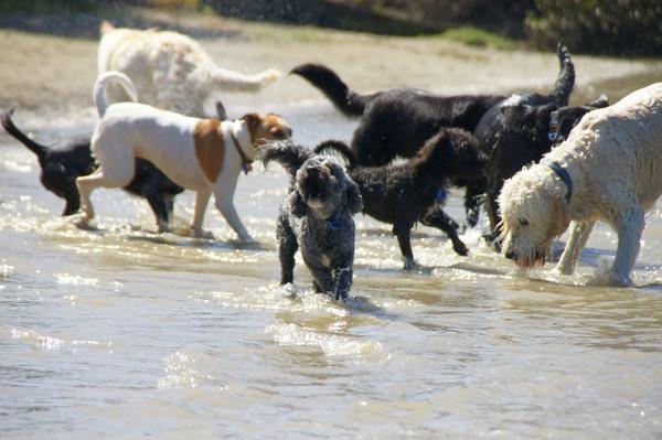 海辺で遊ぶ犬たち
