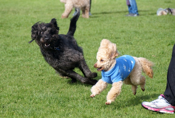 楽しそうに走る犬たち