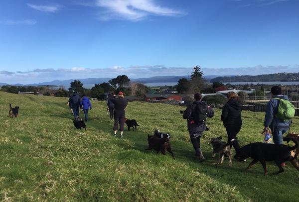 ドッグウォーキンググループのみんなと犬のお散歩