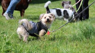 お友達とお散歩の愛犬ルーシー