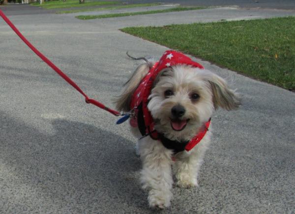 お散歩を楽しむ愛犬ルーシー