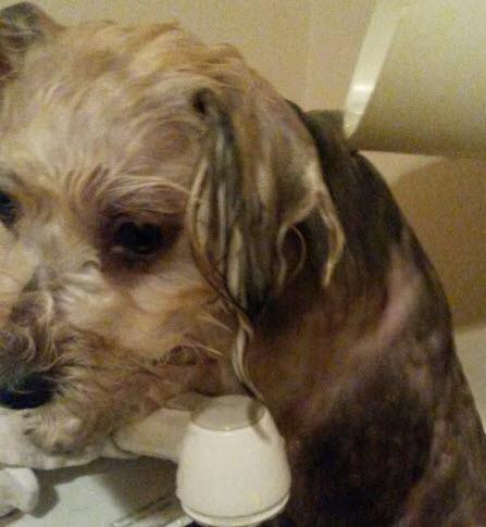 ニンニク風呂に入っている犬