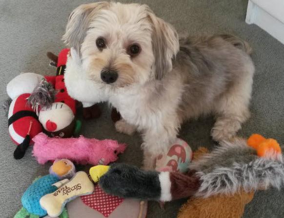 犬とたくさんのおもちゃ