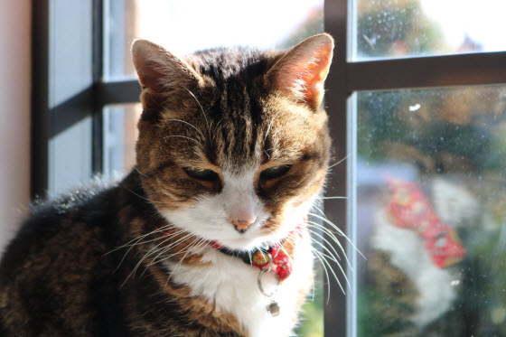 猫が窓辺で