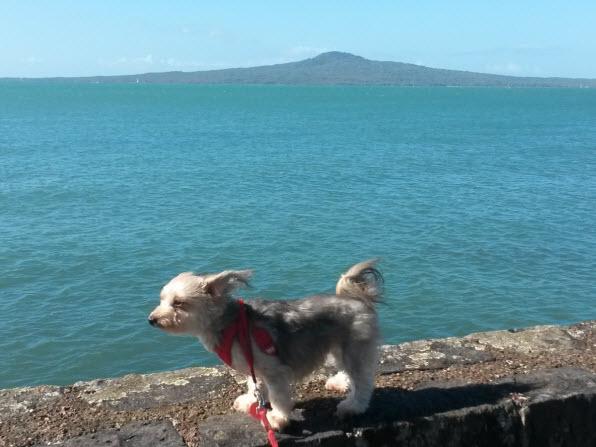 愛犬ルーシー海で