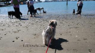 愛犬ルーシーがビーチで