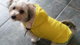 黄色いレインコートを着た愛犬ルーシー
