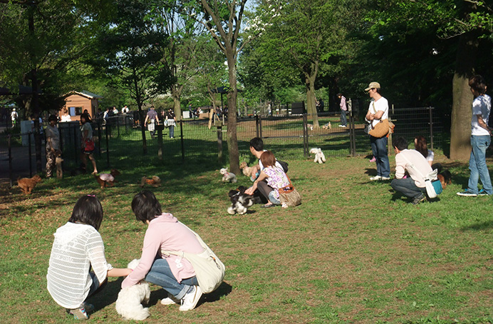 昭和記念公園 ドッグラン