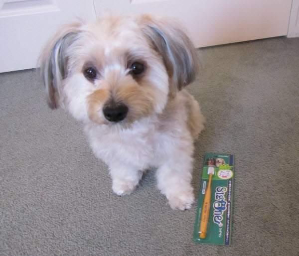 ビバテックシグワン犬の歯ブラシとルーシー