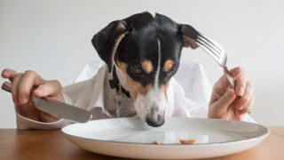 テーブルで食べる犬