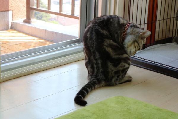 グルーミングをしてる猫
