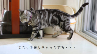 また下痢した猫