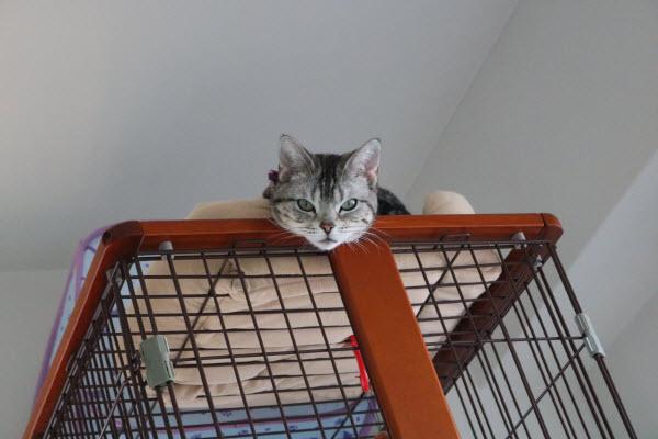 ケージの天辺にいる猫