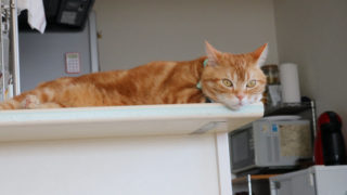 キッチンのベンチの上で寝る猫