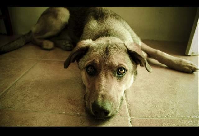 犬が申し訳なさそうな顔をしてる