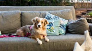 カウチに座っている犬