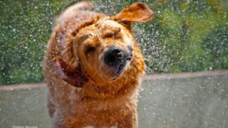 犬が水しぶきをあげている