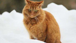 雪の中で佇む猫