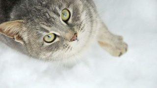 猫の美しい目