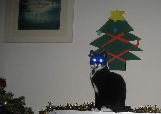 暗闇の猫の目