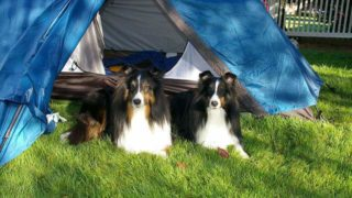 2匹の犬とキャンプ