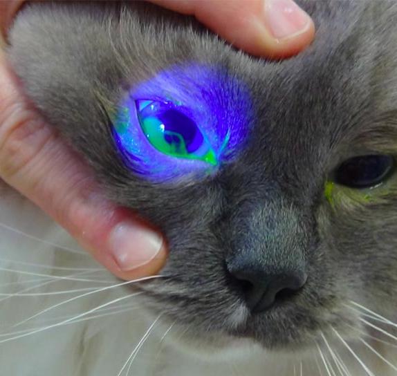猫の角膜びらん
