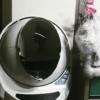 猫の自動トイレ