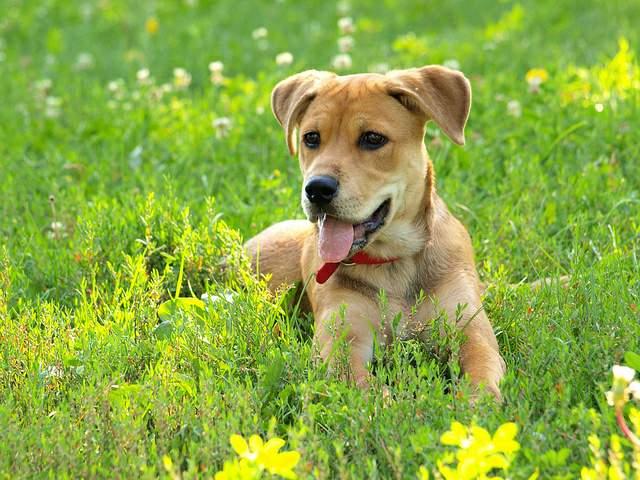 草原に座る犬