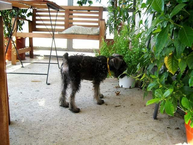 温室にいる犬