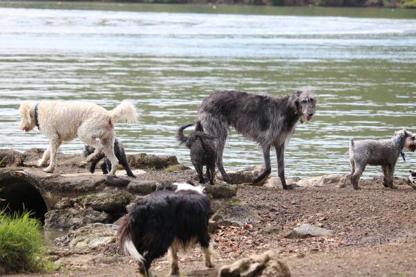 水辺で遊ぶ犬たち