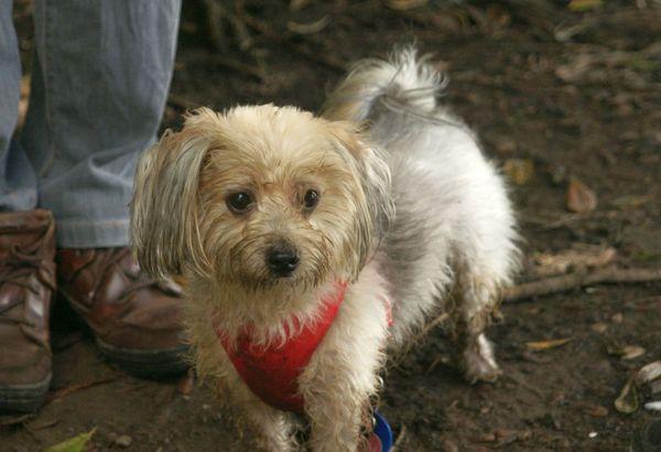 泥んこになった愛犬ルーシー