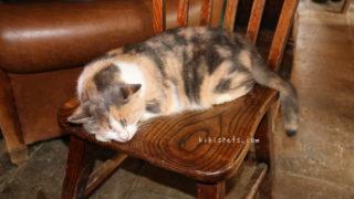 グリーンドラゴンの暖炉の前で眠る猫