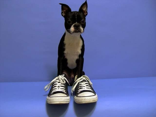 人間の靴を履いた犬