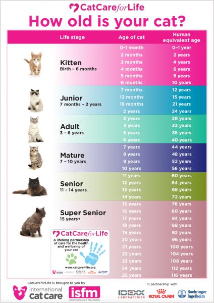 猫の歳換算表