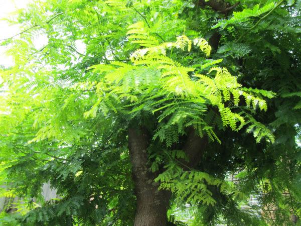 オークランドの緑