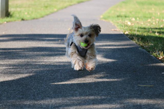 ボールで遊ぶルーシー