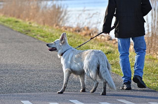 犬をリードで散歩中