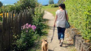 外出自粛要請中に犬とお散歩